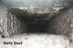 Dusty-Duct-labeled